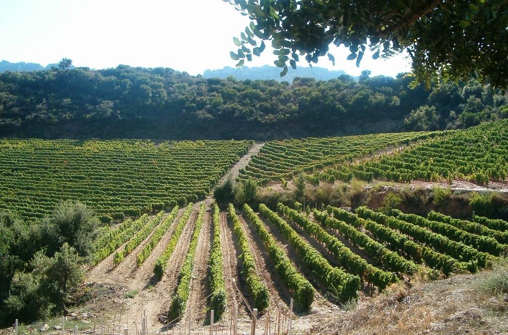 """Nuovi bandi nel settore del vino: attive le misure """"Investimenti"""" e """"Ristrutturazione e riconversione dei vigneti"""""""